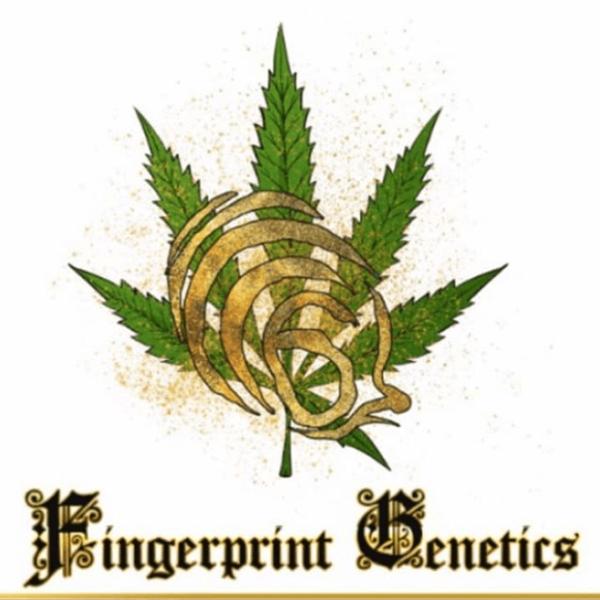 Fingerprint Genetics
